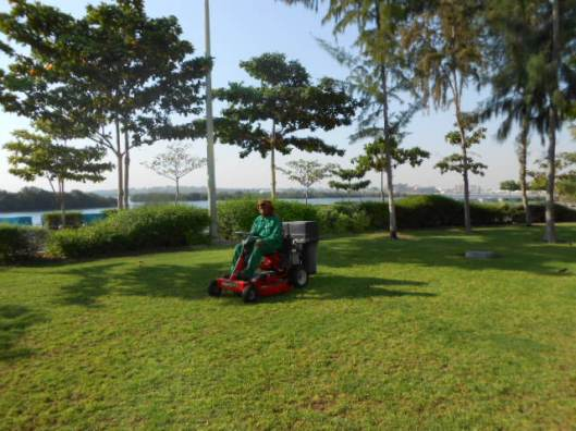 Ride on Mower (1)
